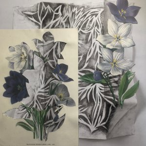 'Platycodon Grandiflorum' Mixed media Collage 2020